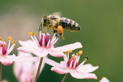 GIS radzi jak postępować po użądleniu osy, pszczoły i szerszenia! DOWIEDZ SIĘ!