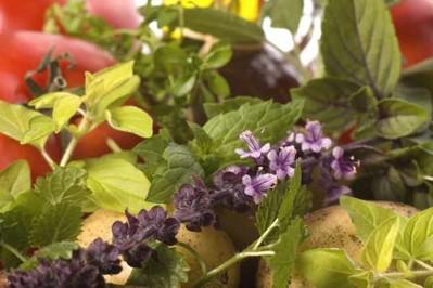 Jak pielęgnować i do czego stosować zioła domowej uprawy? Przyprawy i leczenie