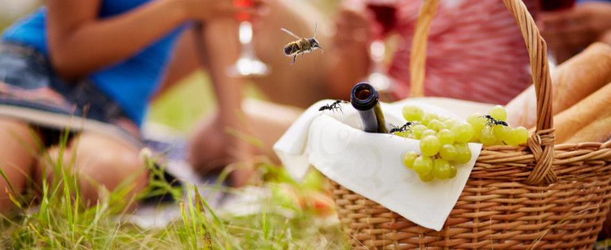 Już nam nie straszne ukąszenia owadów! SPRAWDZONE METODY!